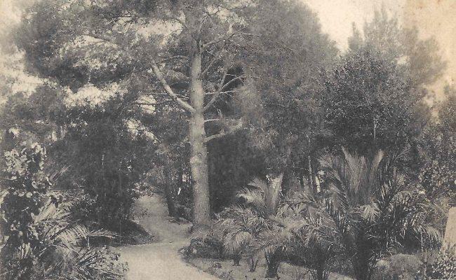 paseo palmeras